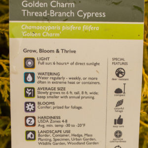 Golden Charm Thread-Branch Cypress