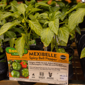 MexiBelle Spicy Bell Peppers