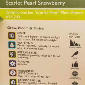 Scarlet Pearl Snowberry
